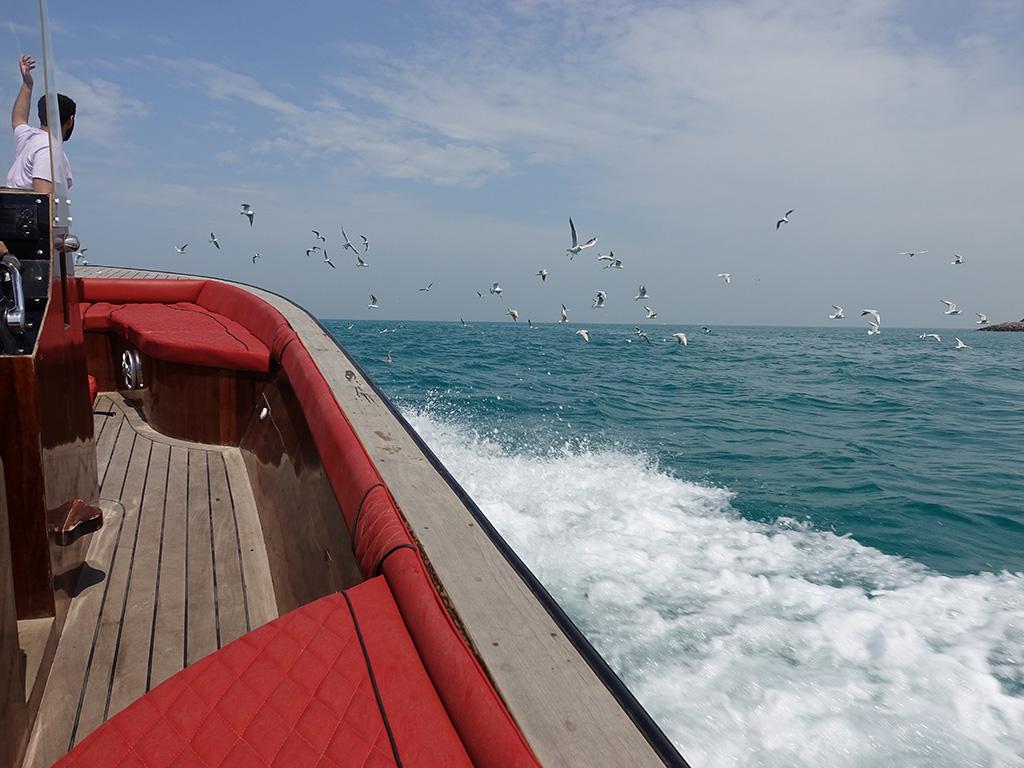 Abu Dhabi Boating - Birds Flying - Sony RX100 V