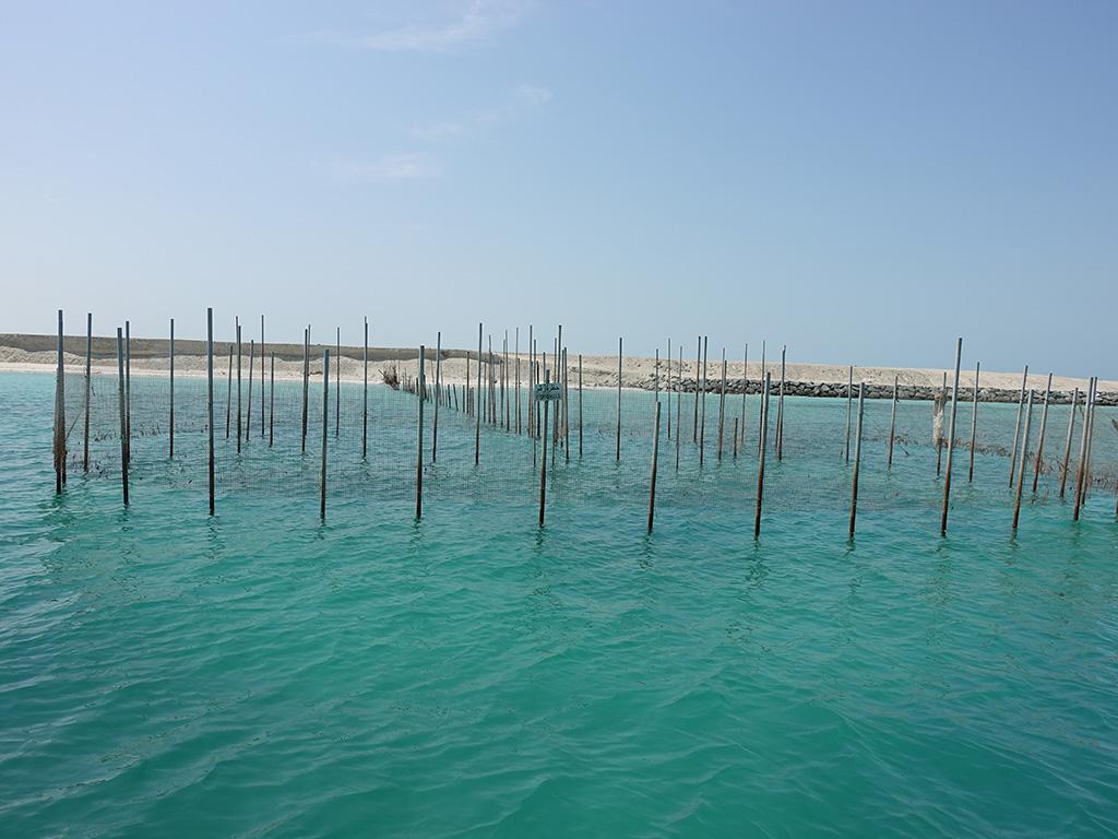 Fish Trap - Abu Dhabi - Sony RX100 V