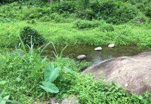 Philippines Jungle Stream