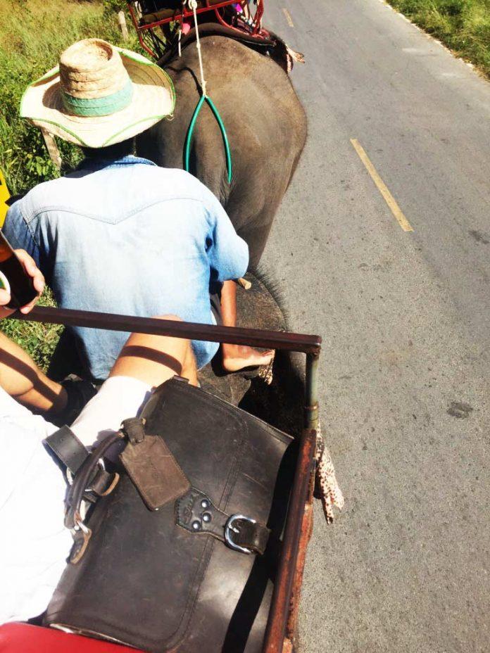 Saddleback Leather Thin Briefcase Travel Photos - Riding an Elephant in Thailand