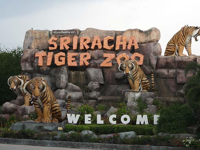 Sriracha Tiger Zoo Thailand